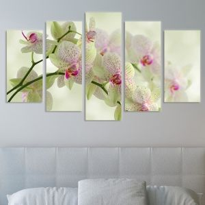 0093 Wall art decoration (set of 5 pieces) White orchids