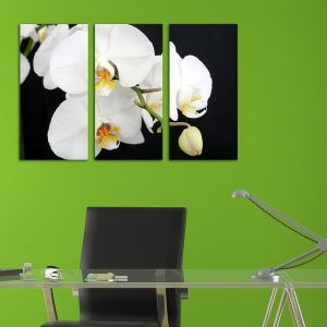 0138 Wall art decoration (set of 3 pieces) White orchid on a black background