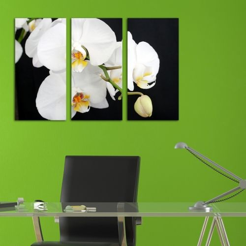 Canvas art Orchids black nad white