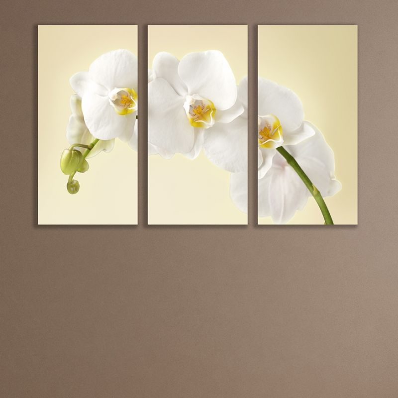 Adorable 20 orchid wall art design decoration of framed 5 for Orchid decor
