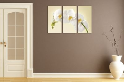 Canvas wset of 3 pieces beautiful white orchid