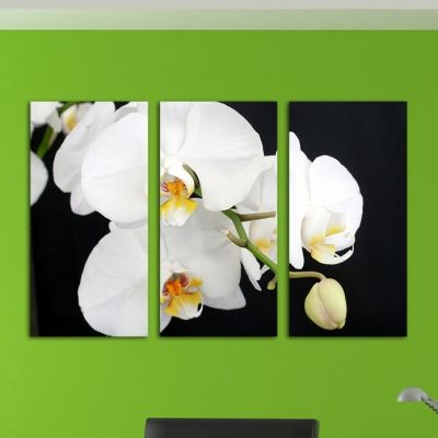 Black and white canvas art with orchids