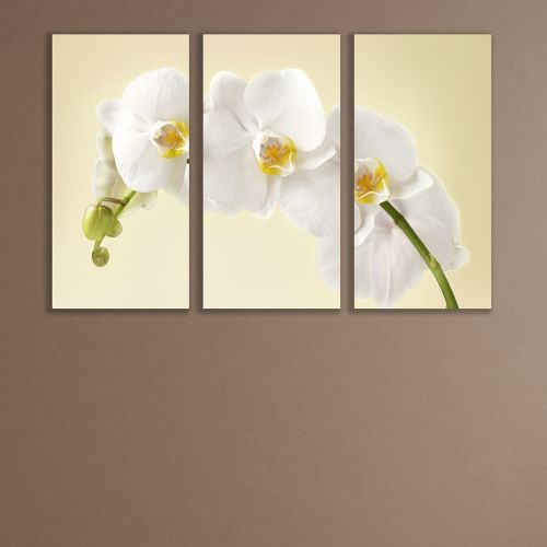 canvas wall art set white orchid