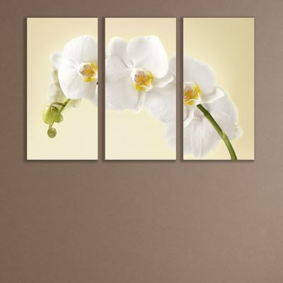0347 Wall art decoration (set of 3 pieces)  Gentle white orchid