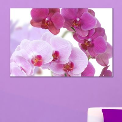0099_1 Wall art decoration Beautiful orchids