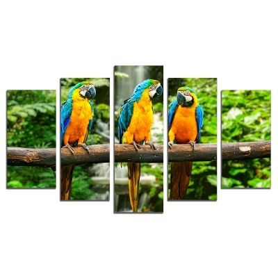 0429 Wall art decoration (set of 5 pieces) Parrots