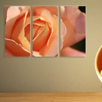 0072 Wall art decoration (set of 3 pieces) Orange rose