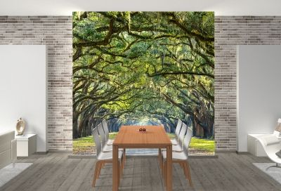 T0666 Wallpaper Forest landscape in green